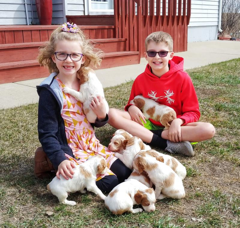 Haugen Ranch Kennels, Dog Boarding Minot North Dakota, Brittany Puppies