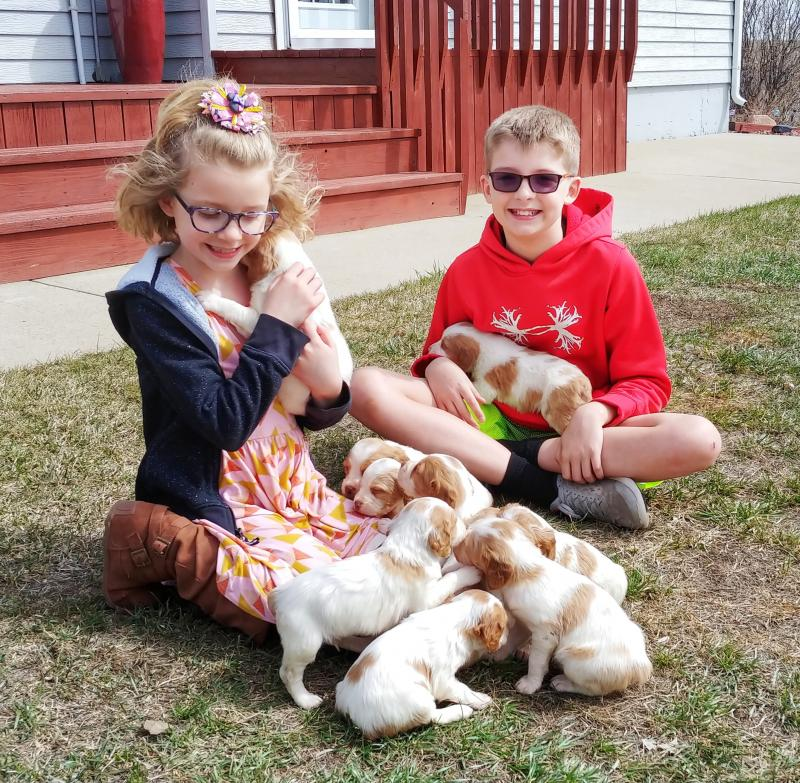 Haugen Ranch Kennels Minot, North Dakota Dog Boarding Brittany Pups