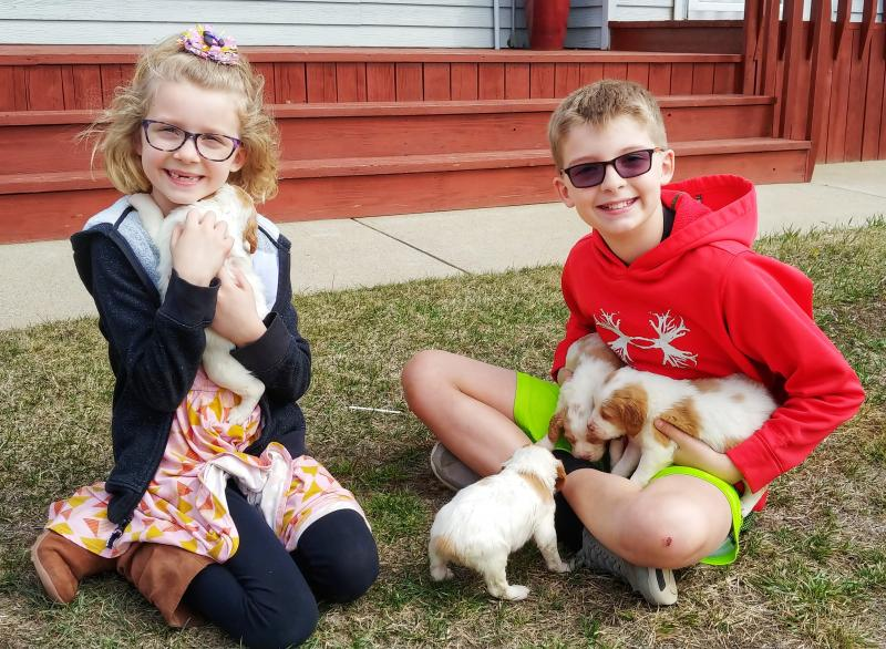 Dog Boarding Minot North Dakota, Haugen Ranch Kennels, Brittany Puppies