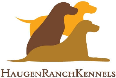 Haugen Ranch Kennels Hunting Pups Dog Boarding and Kenneling Minot North Dakota